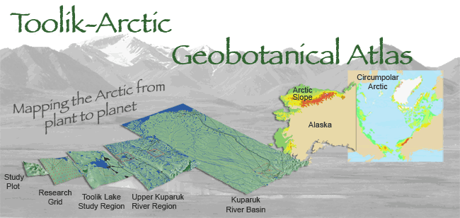 Toolik-Arctic Geobotanical Atlas Website Header