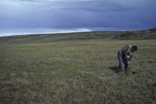 Wet sedge, moss tundra, Community No. 29, near Kaktakturuk River, Arctic Coastal Plain, AK. (Photo: D.A. Walker).