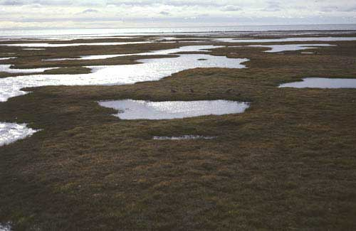 Wet coastal tundra complex, of map unit W1.2, coastal area of Arctic National Wildlife Refuge. (Photo: D.A. Walker).