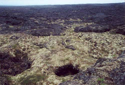 Barren complex on lava. Community No. 74 near Imuruk Lake, Seward Peninsula, Alaska (Photo: D.A. Walker).