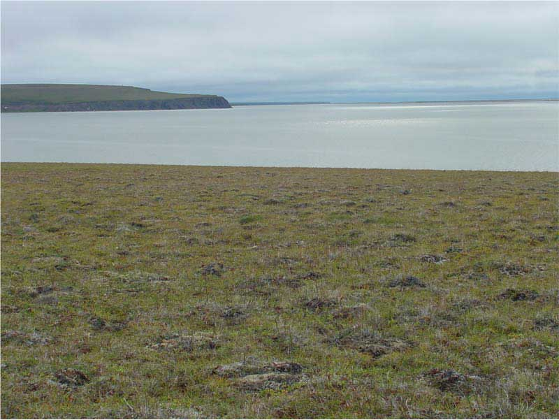 Subzone D. Ambarchik, Kolyma River vicinity, Russia. Photo D.A. Walker.