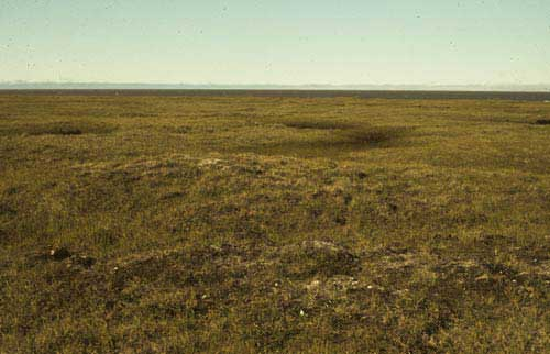 Wet tundra complex; Barrow, Alaska (Photo: D.A. Walker).