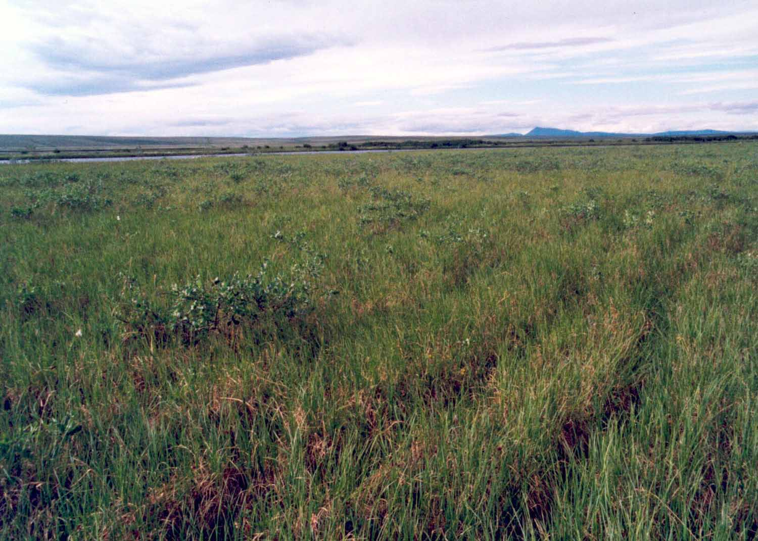 North Slope coastal plain, Alaska (Photo: D.A. Walker).