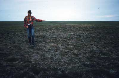 Photo A. Stabilized dune near Inigok drill site in NPR_A, Alaska, with <em>Diapensia lapponica</em>-<em>Alectoria</em> spp. community. Walker slide 82-8a-23. D.A. Walker.