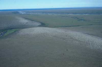 Photo D. Dry tundra on ridge near the Kaktakturuk River, Arctic National Wildlife Refuge. Walker slide 81-20-19. D.A. Walker.