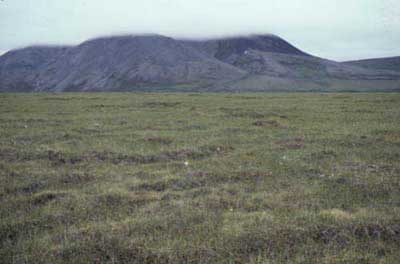 Wet sedge, moss tundra, Community No. 29, Brooks Range, Alaska (Photo: D.A. Walker).