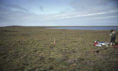 Moist non-tussock sedge, dwarf-shrub moss tundra (nonacidic tundra), Community No. 27, Okpilak River, Arctic Coastal Plain, Alaska (Photo: D.A. Walker).