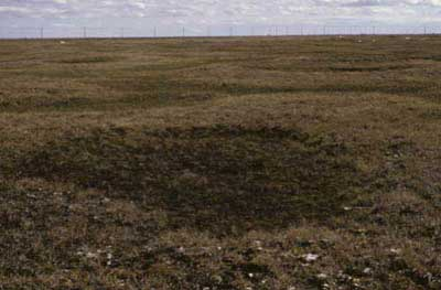 Wet sedge, moss tundra complex, Community Nos. 2, 3 and 4, Barrow, Arctic Coastal Plain, Alaska (Photo: D.A. Walker).