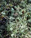 vegetation photo